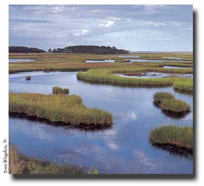 WETLAND DEFINITION EPUB