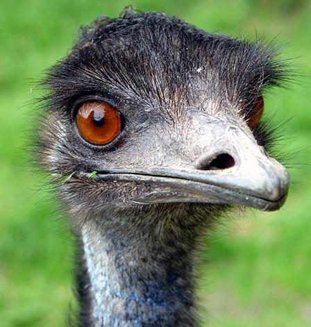 [Image: emu.jpg]